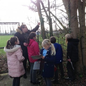 Outdoor Learning Afternoon in Willow