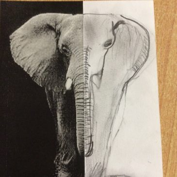 Sketching animal faces – Maple Class